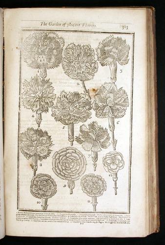 Image of Parkinson-1656-313