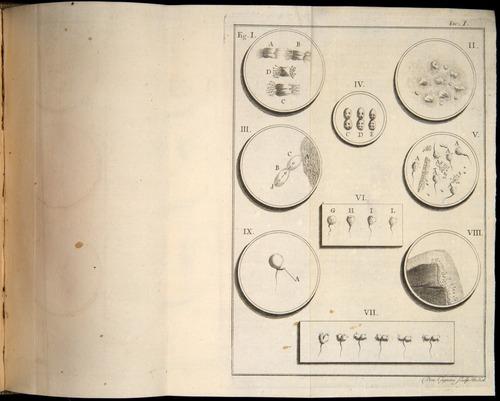 Image of Spallanzani-1776-v1-304-t01r