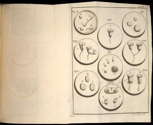 Image of Spallanzani-1776-v1-304-t02r