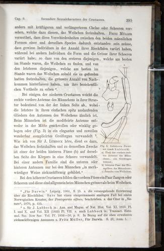 Image of Darwin-F1065.1-1871-00295