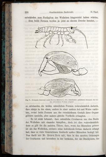 Image of Darwin-F1065.1-1871-00298