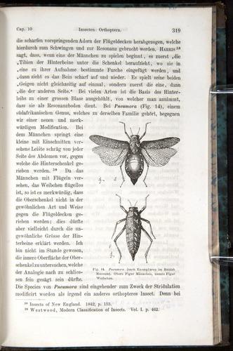 Image of Darwin-F1065.1-1871-00319