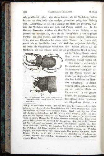 Image of Darwin-F1065.1-1871-00328