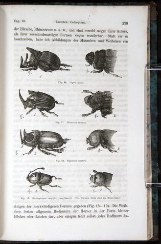 Image of Darwin-F1065.1-1871-00329