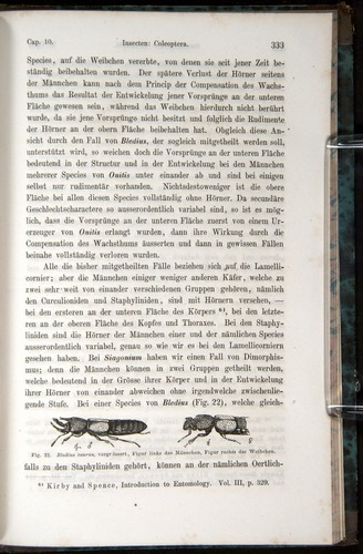 Image of Darwin-F1065.1-1871-00333