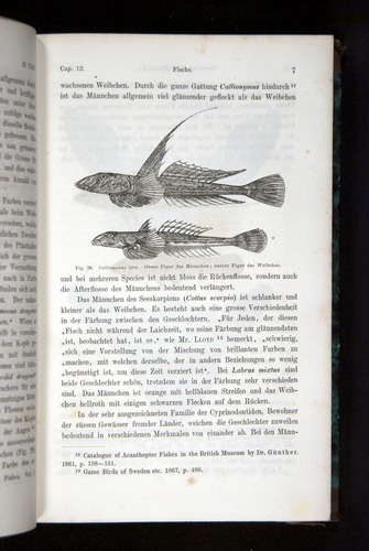 Image of Darwin-F1065.2-1871-007