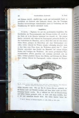 Image of Darwin-F1065.2-1871-020
