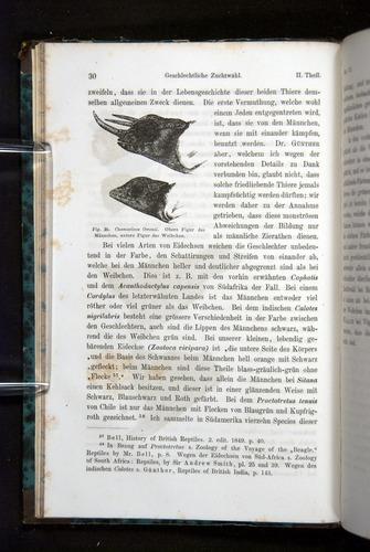 Image of Darwin-F1065.2-1871-030