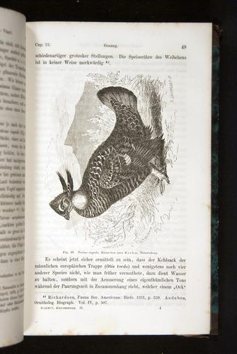 Image of Darwin-F1065.2-1871-049