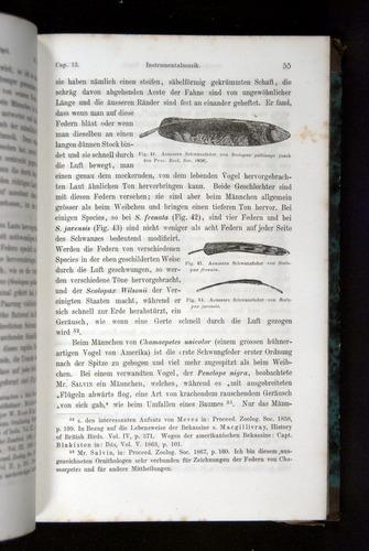 Image of Darwin-F1065.2-1871-055