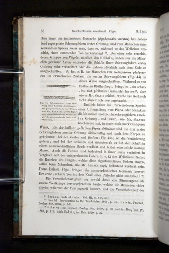 Image of Darwin-F1065.2-1871-056