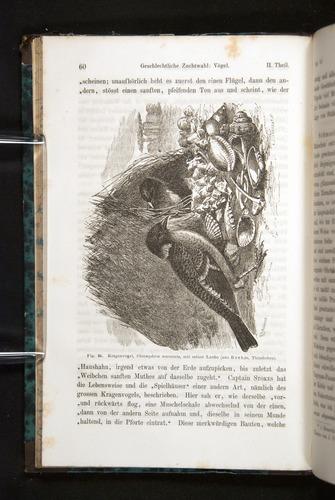 Image of Darwin-F1065.2-1871-060
