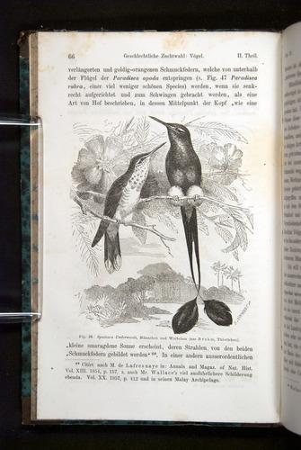 Image of Darwin-F1065.2-1871-066