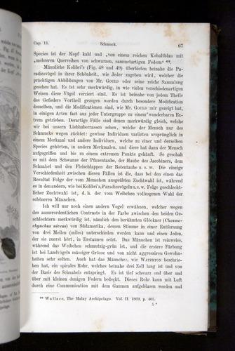 Image of Darwin-F1065.2-1871-067