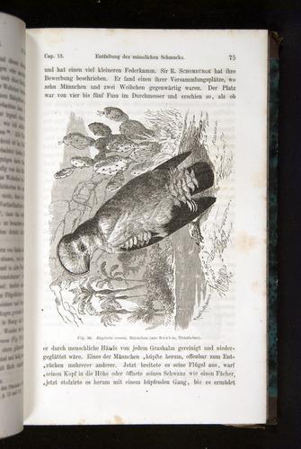 Image of Darwin-F1065.2-1871-075