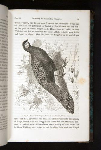 Image of Darwin-F1065.2-1871-077