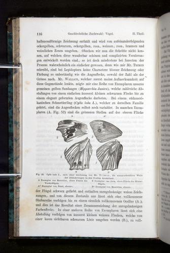 Image of Darwin-F1065.2-1871-116
