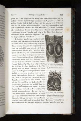 Image of Darwin-F1065.2-1871-121