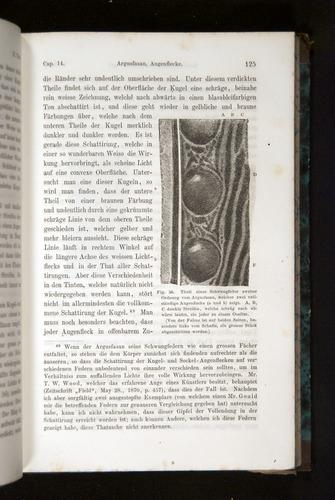 Image of Darwin-F1065.2-1871-125