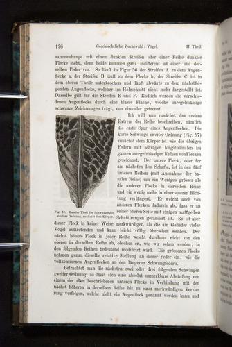 Image of Darwin-F1065.2-1871-126