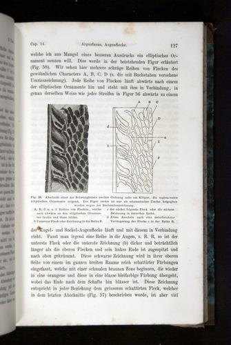 Image of Darwin-F1065.2-1871-127