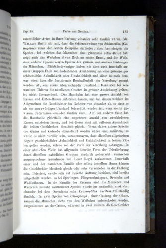 Image of Darwin-F1065.2-1871-155