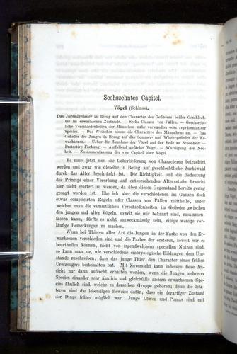Image of Darwin-F1065.2-1871-160