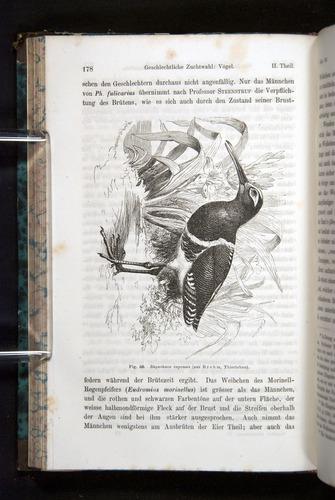 Image of Darwin-F1065.2-1871-178