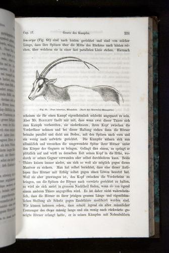 Image of Darwin-F1065.2-1871-221