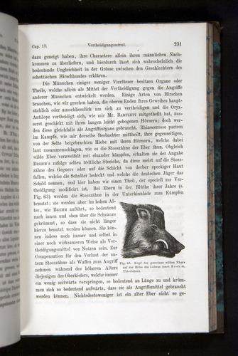 Image of Darwin-F1065.2-1871-231