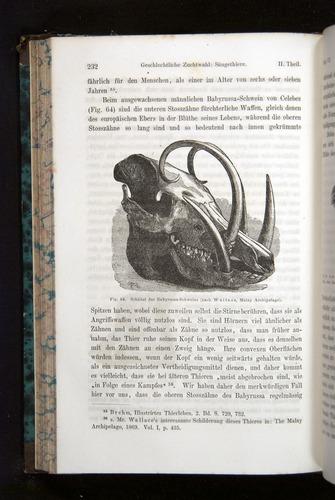 Image of Darwin-F1065.2-1871-232