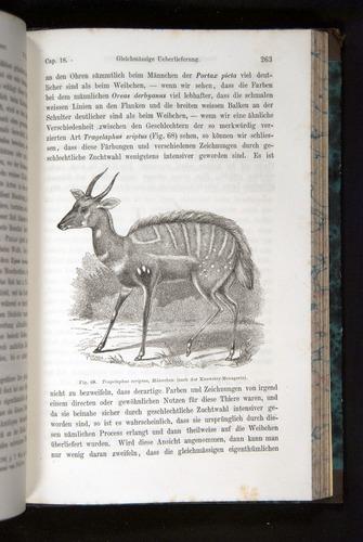 Image of Darwin-F1065.2-1871-263