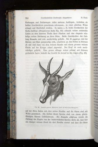 Image of Darwin-F1065.2-1871-264