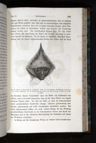 Image of Darwin-F1065.2-1871-269