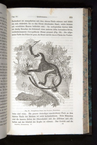 Image of Darwin-F1065.2-1871-273