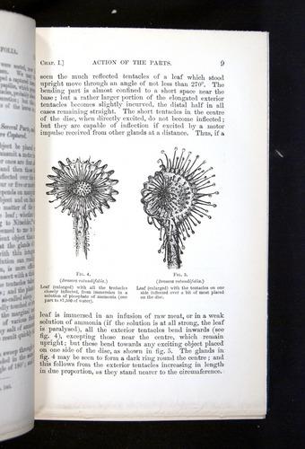Image of Darwin-F1225-1888-009