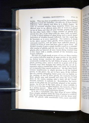Image of Darwin-F1225-1888-030