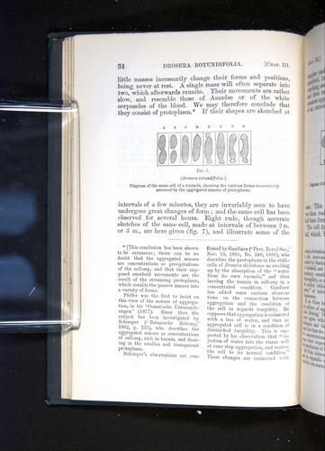 Image of Darwin-F1225-1888-034