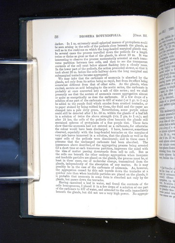 Image of Darwin-F1225-1888-038