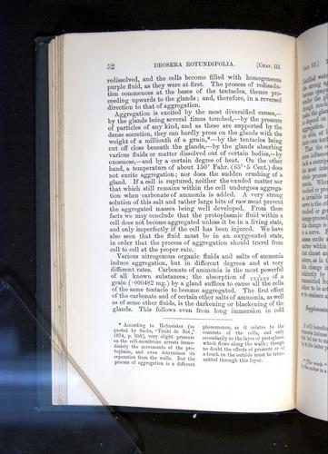 Image of Darwin-F1225-1888-052