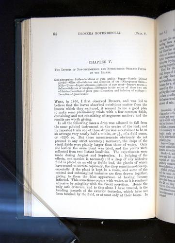 Image of Darwin-F1225-1888-064
