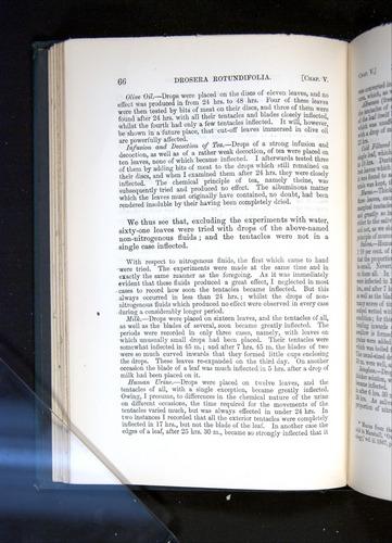 Image of Darwin-F1225-1888-066