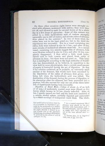 Image of Darwin-F1225-1888-082