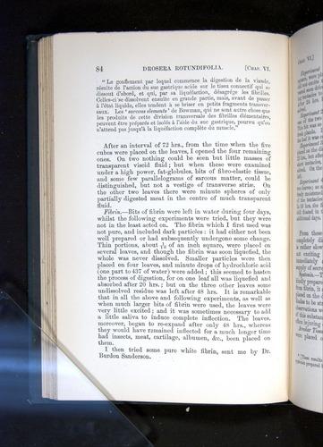 Image of Darwin-F1225-1888-084
