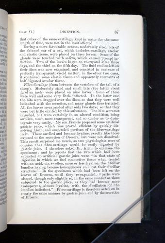 Image of Darwin-F1225-1888-087