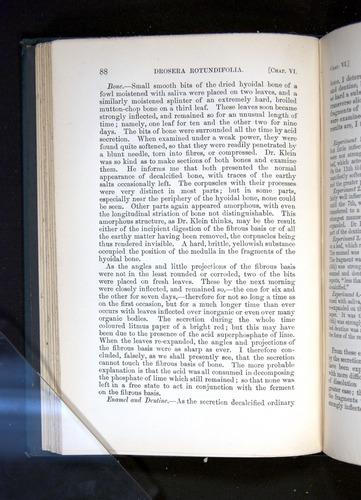 Image of Darwin-F1225-1888-088