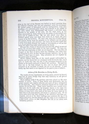 Image of Darwin-F1225-1888-104