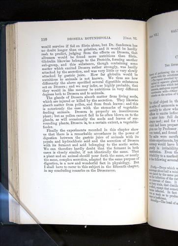 Image of Darwin-F1225-1888-110
