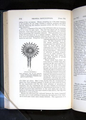 Image of Darwin-F1225-1888-114