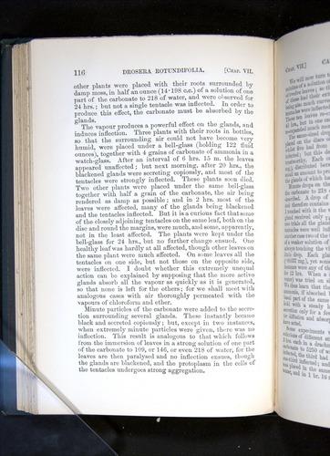 Image of Darwin-F1225-1888-116